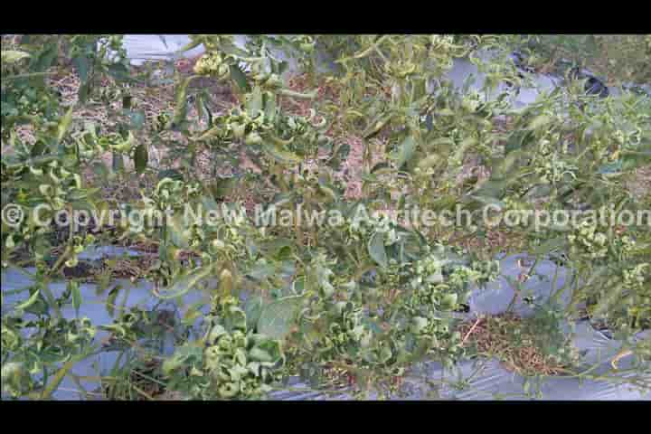 herbal npop certified viricide for plants in india