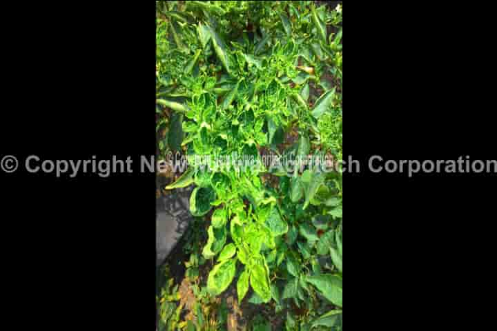 vriksha ayurveda based virucide for plants