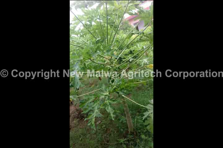 virocin new malwa agritech corporation